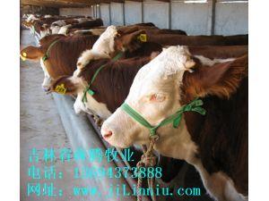 肉牛|西门塔尔牛|肉牛价格|牛犊|牛犊价格|肉牛养殖|吉林肉牛|东北肉牛|母牛价格|西门塔尔牛价格 吉林省犇腾牧业,吉林省犇腾养牛合作社